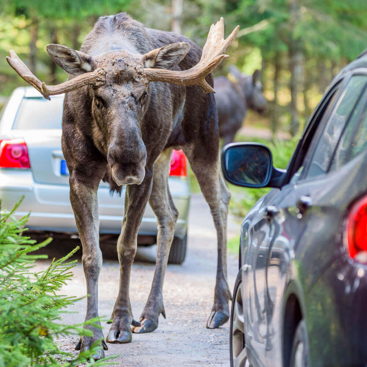 The Importance of a Moose Test and Why New Cars are Still Failing at It